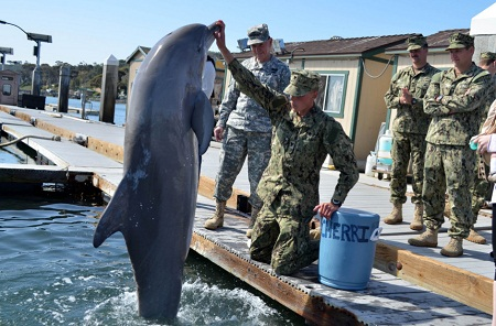 """""""Biệt đội cá heo""""chống khủng bố của quân đội Mỹ"""